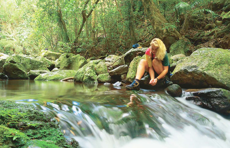 The Gold Coast Hinterland Walk