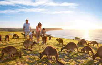 Island of Kangaroo