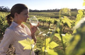 Margaret River Wine Tasting